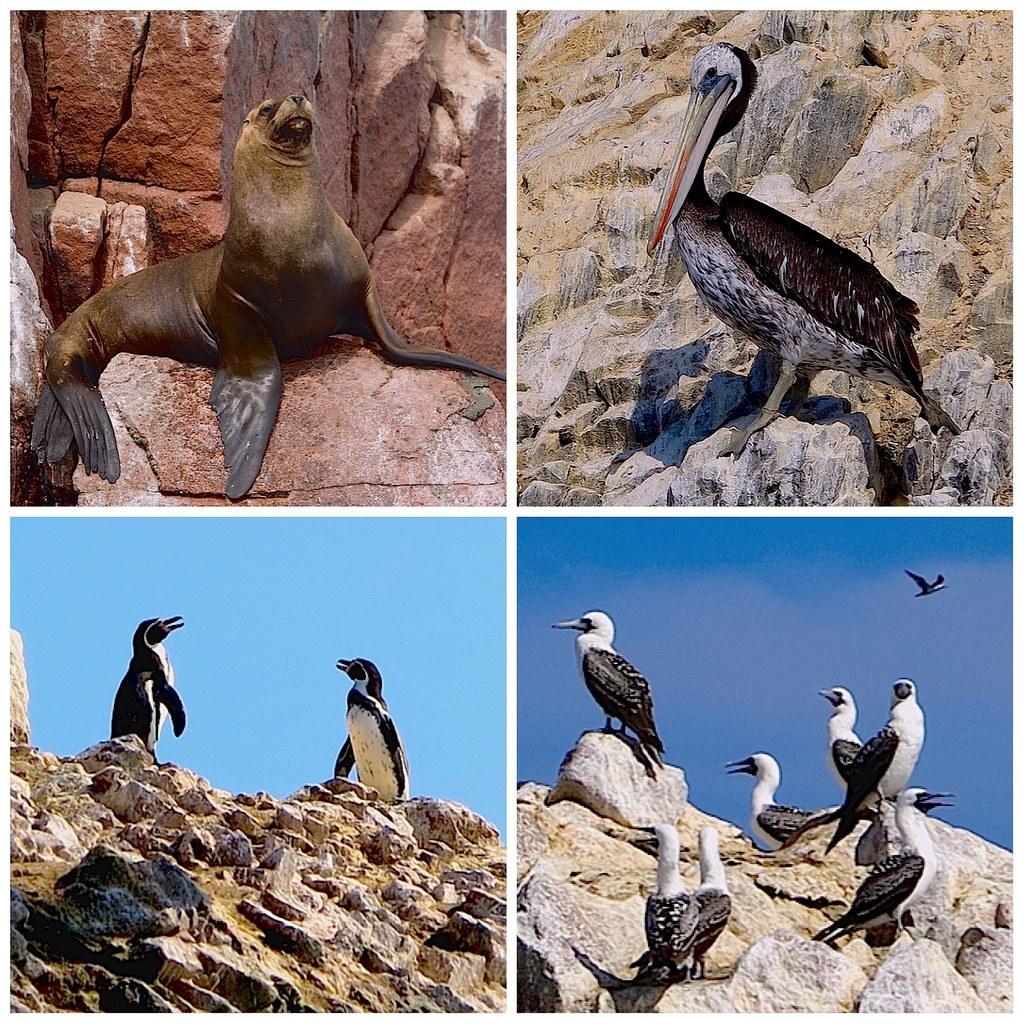 Peru utazás állatvilág
